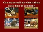 Can anyone tell me what is these cattle have in common