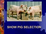SHOW PIG SELECTION