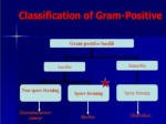 General Characters of Bacillus spp
