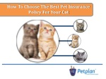 How to choose the best pet insurance policy for your cat