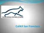 Appropriate and Effective Dog Training in San Francisco, CA