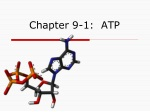Chapter 9-1: ATP