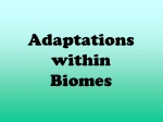 Adaptations within Biomes