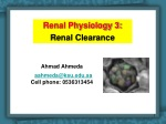 Renal Physiology 3: Renal Clearance