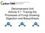 Decomposers Unit Activity 5.1: Tracing the Processes of Fungi Growing: Digestion and Biosynthesis