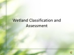 Wetland Classification and Assessment