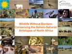 Wildlife Without Borders: Conserving the Sahelo-Saharan Antelopes of North Africa