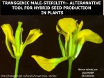 TRANSGENIC MALE-STERILITY:- ALTERANATIVE TOOL FOR HYBRID SEED PRODUCTION IN PLANTS