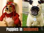 puppies in costumes