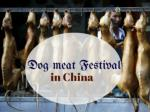 Dog meat Festival in China