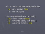 Car – carnivora (meat-eating animals) ca  – canis familiaris ( dog )  fe – felis catus (cat)