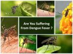 Are You Suffering From Dengue Virus