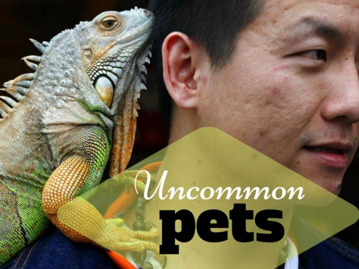 uncommon pets n.