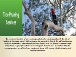Tree pruning in Perth