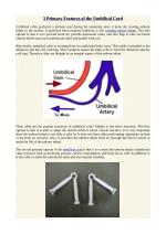 3 Primary Features of the Umbilical Cord
