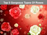 Top 5 Gorgeous Types Of Roses