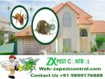 ZX Pest Control Noida Call us at 9899176888