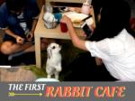 The first rabbit cafe