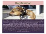 Dog Behavior: How Do Dogs Communicate?
