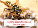 Bee Removal Tips
