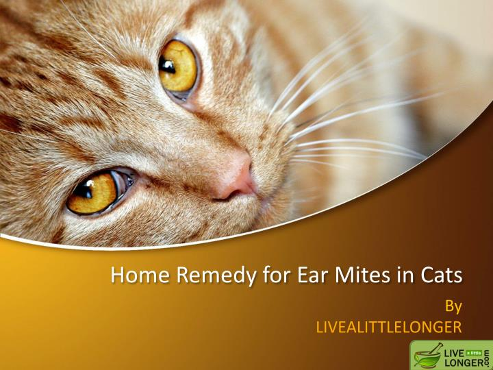 Ppt Home Remedies For Ear Mites In Cats Powerpoint Presentation