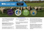 Case Study - Meredith Dairy by Aline Pumps