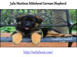 julie martinez german shepherd wonder lake