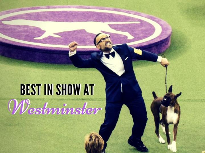 Best in Show at Westminster
