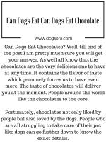 Can Dogs Eat Chocolate