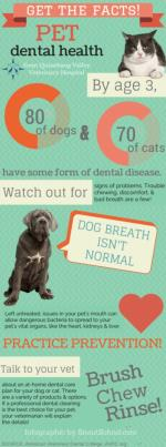 Quick Facts and the Truth About Pet Dental Health