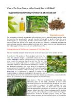 Uses and Benefits of Neem Plant