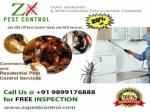 Get 20% Off Pest Control Noida and NCR Services