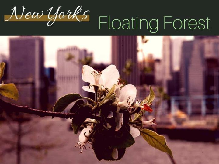 New York's floating forest