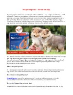 Nexgard Spectra For Dogs - Nexgard Flea, Tick, Heartworm and Intestinal Worm Control