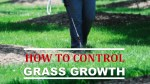 How to Control Grass Growth
