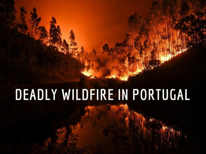 deadly wildfire in portugal n.