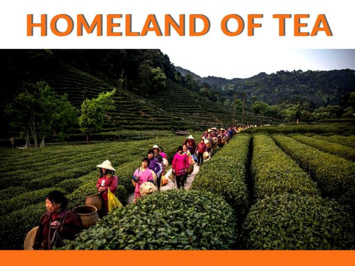 China, Homeland of Tea Canister