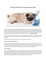 4-Steps-That-Will-Aid-You-In-Treating-Open-Wounds-in-Dogs