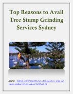 Top Reasons to Avail Tree Stump Grinding Services Sydney