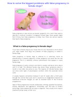 How to solve the biggest problems with false pregnancy in female dogs?
