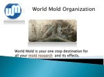 Mold treatment companies