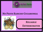 Get Affordable Exterminator Service with No Pests Rancho