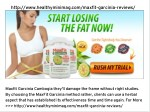 MaxFit Garcinia Cambogia is the lively component