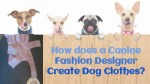 Things Consider By Canine Fashion Designer For Dog Clothes