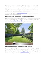 Late Summer Lawn Care Services