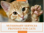 Affordable Cat Veterinary Care in West Palm Beach