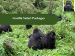 Tips for Taking Best Gorilla Safari Packages For Your Holidays