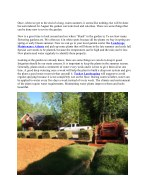 Late summer lawn care tips