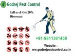 Pest Control Gurgaon - Get 20% Discount | Free Inspection
