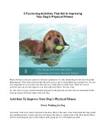 5 Fun loving Activities That Aid In Improving Your Dogs Physical Fitness